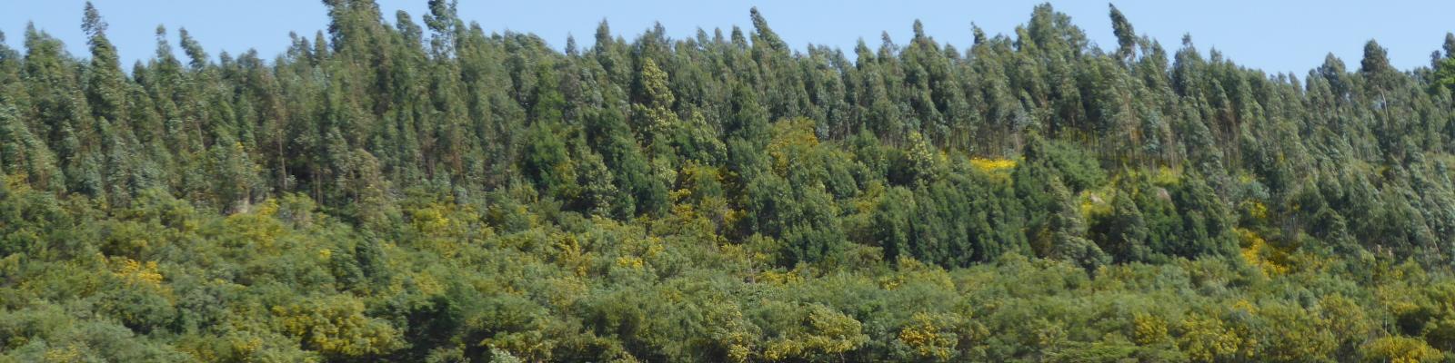 Reforestation & climate
