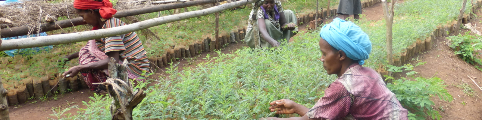 Production of seedlings